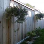 Wood Fences - Bytown LUmber